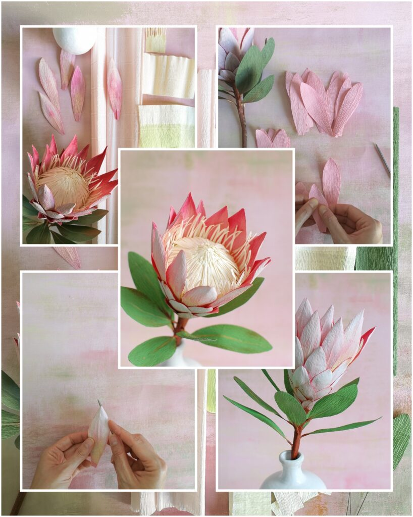 King Protea Tutorial